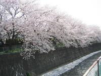 kawasakura.jpg