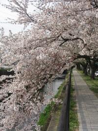 kawasakura2.jpg