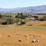 ニュージーランドでは圧倒的に車が便利で楽しい。レンタカーを運転する時に注意するべき点